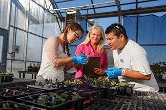 Three students examining plant life inside a greenhouse